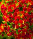 Blommor är begåvade till älsklingen Arkivfoto