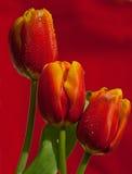 Blommor är den bästa gåvan för kvinnor vid ferier Royaltyfri Bild