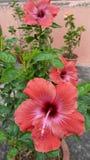 Blommor är den mest sweetest sakerguden som göras någonsin och, glömde att sätta en anda in i Royaltyfri Bild