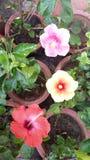 Blommor är den mest sweetest sakerguden som göras någonsin och, glömde att sätta en anda in i Arkivbilder