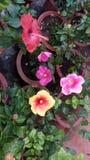 Blommor är den mest sweetest sakerguden som göras någonsin och, glömde att sätta en anda in i Royaltyfria Bilder