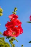 Blommor är röda med himmel Royaltyfria Foton