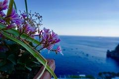 Blommor över medelhavet på den Amalfi kusten, Italien Royaltyfri Fotografi