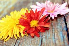 Blommor över trä Royaltyfri Fotografi
