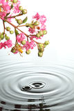 blommor över vatten Arkivfoton