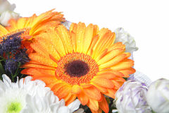 Blommor över vit Royaltyfri Foto