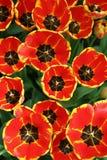 blommor 1 arbeta i trädgården fjädern Royaltyfri Fotografi
