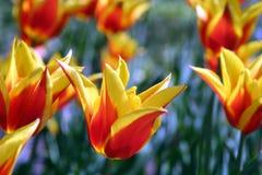 blommor 1 arbeta i trädgården fjädern arkivfoton