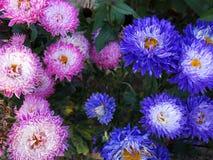 01 blommor Royaltyfri Fotografi