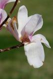 blommor royaltyfria foton