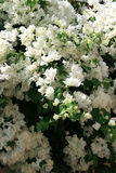 blommor royaltyfri fotografi