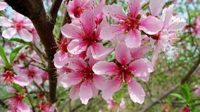 Blommor Fotografering för Bildbyråer