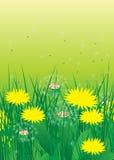 Blommor. Fotografering för Bildbyråer