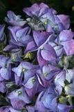 Blommor 12 Royaltyfri Bild