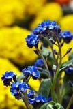 Blommor 10 Arkivfoton