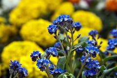 Blommor 11 Royaltyfri Fotografi