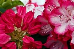 2 blommor arkivbild