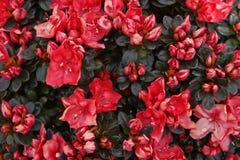 17 blommor Royaltyfri Fotografi
