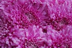 Blommor Arkivfoto