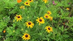 Blommor arkivfilmer