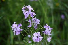 Blommor Royaltyfria Bilder