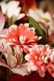 Blommor Arkivbild