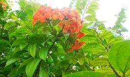 2 blommor Arkivfoton