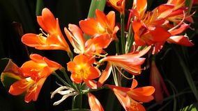 Blommor stock video