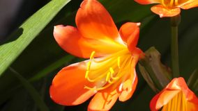 Blommor lager videofilmer