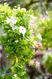 Blommor 001 Royaltyfri Fotografi