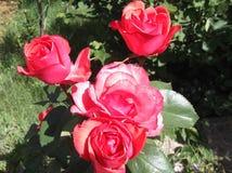 5 blommor Royaltyfri Foto