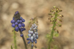 3 blommor Arkivbild