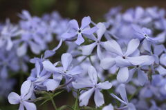 Blommor royaltyfri foto