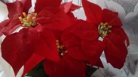 2 blommor Fotografering för Bildbyråer