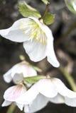Blommor Royaltyfri Bild