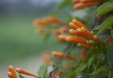 Blommor Arkivbilder