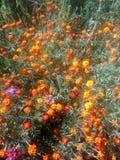 Blommor!!! Royaltyfri Foto