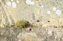 12 blommor Royaltyfria Bilder