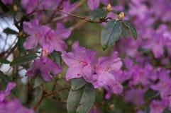 13 blommor Arkivbilder
