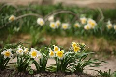 blommor arbeta i trädgården fjädern Royaltyfri Bild