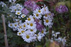 blommor arbeta i trädgården fjädern fotografering för bildbyråer