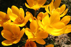 blommor arbeta i trädgården fjädern Royaltyfri Foto