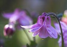 blommor arbeta i trädgården mitt Arkivbild