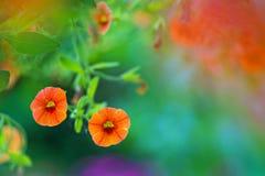 blommor arbeta i trädgården orangen Arkivfoto