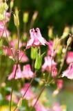 blommor arbeta i trädgården pink Royaltyfri Foto