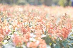 blommor arbeta i trädgården pink Arkivbild