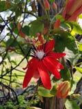 blommor arbeta i trädgården red Arkivbild