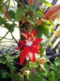 blommor arbeta i trädgården red Royaltyfri Foto