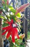 blommor arbeta i trädgården red Arkivfoton
