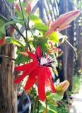 blommor arbeta i trädgården red Arkivbilder
